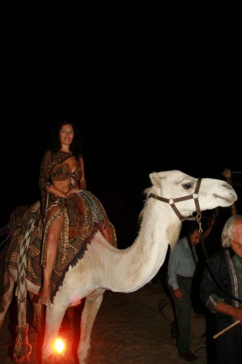 mariage marocain chameau - Location De Chameau Pour Mariage